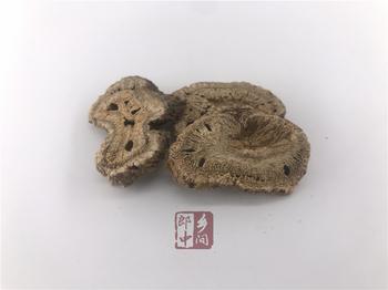 木香的形态分布和中药特征